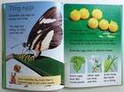 Caterpillars and Butterflies (2)