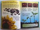 How Flowers Grow (2)